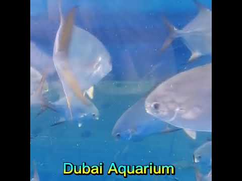 Dubai Aquarium Underwater Zoo