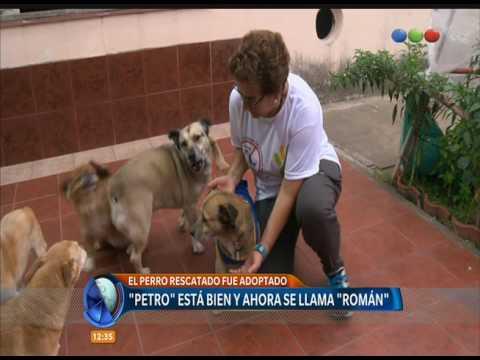 Petro, el perro lleno de brea, fue adoptado