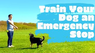 Train your dog to stop in emergencies!