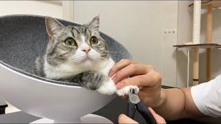 トムとジェリーに夢中な猫の爪を切ったらこうなったww