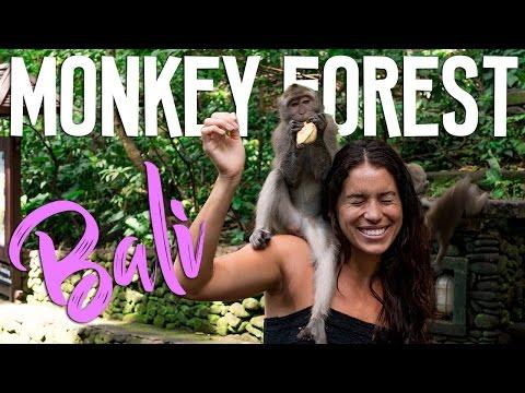 MONKEY FOREST BALI w/ Mari Johnson // TRAVEL VLOG #10