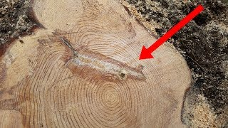 Leñadores cortaron este árbol por la mitad, pero jamás se imaginaron encontrar esto en su interior.
