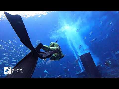 UAE National Day freedive at The Lost Chambers Aquarium in Atlantis Dubai