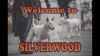 Welcome to Silverwood!