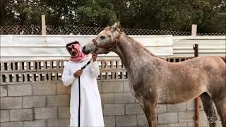 واحة الرياض القديمة تختفي ديار الاعشى  Old Riyadh Oasis