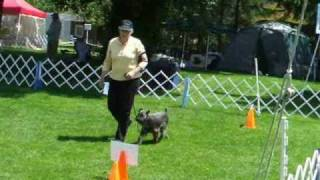 Ckc Rally Obedience Trial Novice June 18 & 20, 2010 Two Qing Runs-one Perfect Score!