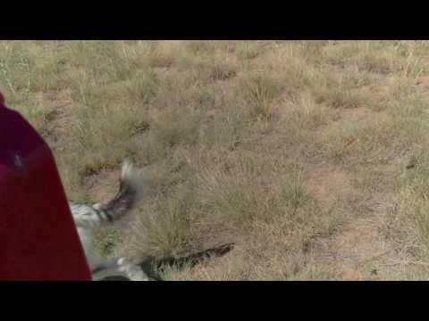 Husky & German shorthair pointer vs ATV