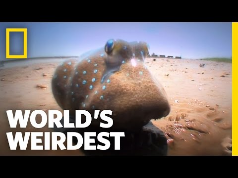 Fish Battle on Land | World's Weirdest
