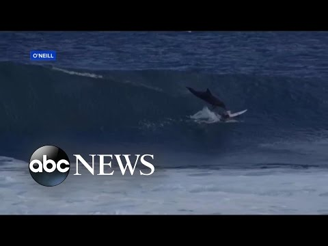 Teen Surfer Astonished After Being Hit by Leaping Dolphin