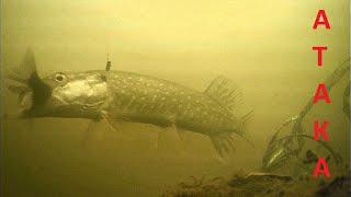 ЩУКА НА ЖИВЦА! Атака щуки на живца! Подводная съемка