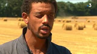 En Normandie, les moissons 2018 satisfaisantes malgré la sécheresse