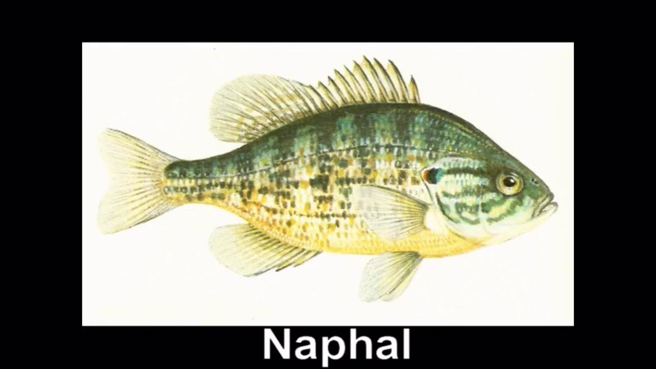 hogyan lehet megszabadulni a folyami halak parazitáitól)