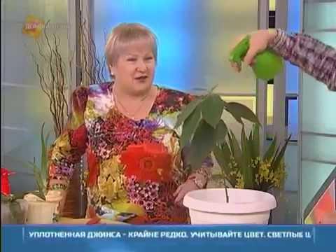 Советы по удобрению комнатных растений в домашних условиях