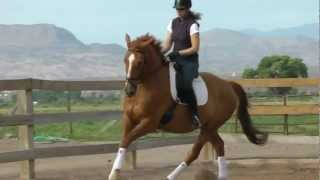 Red Adair SWB Dressage horse for sale