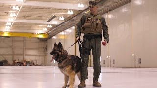 A Military Working Dog Handler