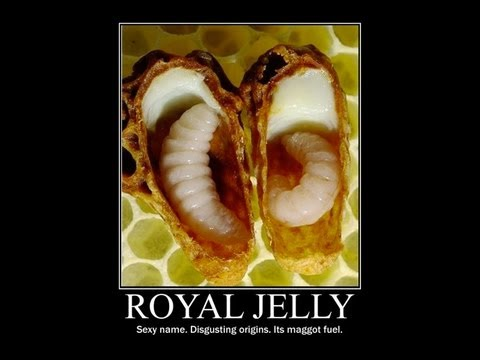 ROYAL JELLY ? LONGEVITY SUPERFOOD OR MAGGOT FUEL? #299 ...
