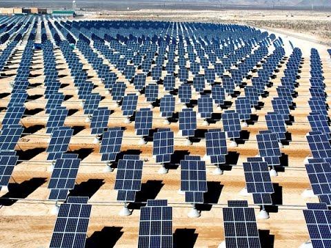 28,000 Birds Killed Yearly by Solar Energy Plant! Plus, Ferguson Update