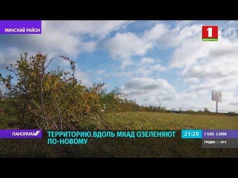 В Минске по-новому подходят к городскому озеленению. Панорама