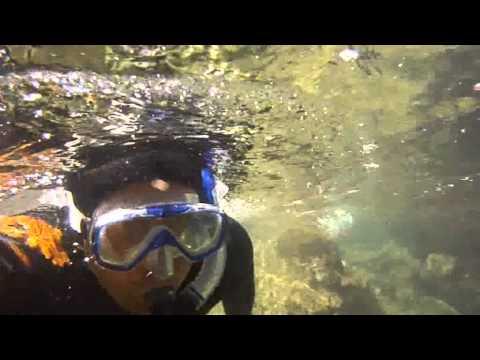 Kina & Paua Free Diving Stewart Island New Zealand