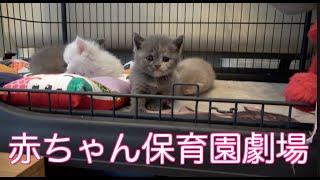 ママの◯っぱいが恋しい赤ちゃん!子猫保育園の模様替え!果たして赤ちゃんの様子の変化は?