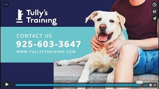 Dog Training West Hollywood