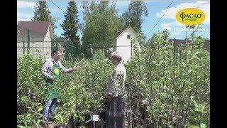 видео Закладка плодового сада