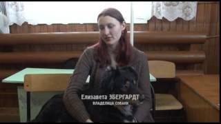 Аджилити  - вид спорта, в котором участвуют собака и её хозяин