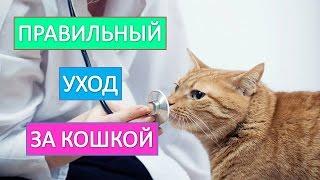 Домашняя кошка. Правильный  уход за кошкой.