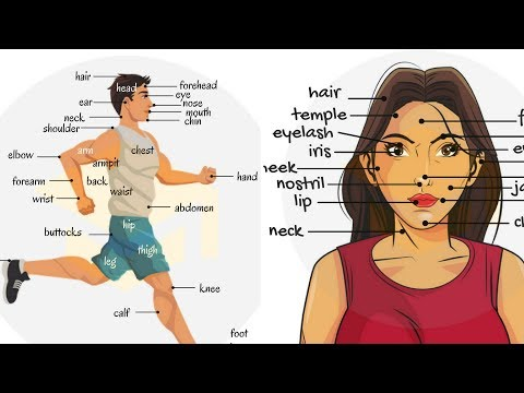 Parts Of The Body in English | Human Body Parts Names for Kids