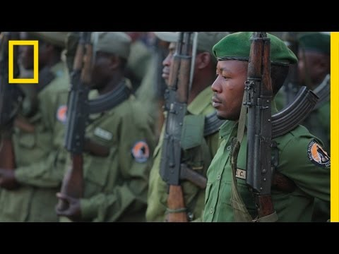 Gorilla Defenders: On the Front Lines of Illegal Wildlife Trafficking | National Geographic