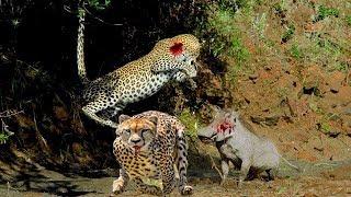 ヒョウ 攻撃 イノシシ, 象 と クロコダイル,虎 と アナコンダ, ヘビ と ...