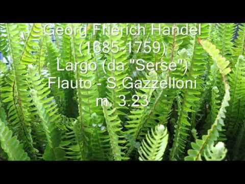 GAZZELLONI 5 Classica flauto