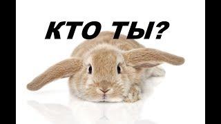 Как определить пол у кролика. Кролик кто ты?