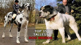 Top 15 Tallest Dog Breeds in the world