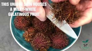 What is Rambutan? Explore this tropical fruit now!