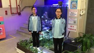 Publication Date: 2018-05-06 | Video Title: 梁校生態教育徑 第一站珊瑚生態缸