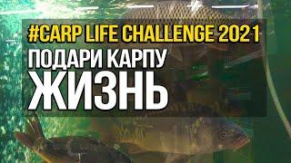 Carp Life Challenge или Подари карпу жизнь в 2021 река Днепр