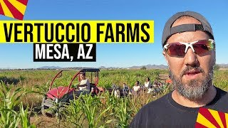 Fall Festival at Vertuccio Farms, Mesa, AZ | Things To Do With Kids In Mesa, Arizona