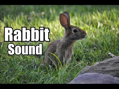 10 Minutes - Rabbit Sound Effect  - Different Rabbit Sounds * HIGH QUALITY *