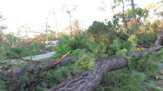 TALLEST FALLEN PINE TREES & Immense Piles of Branches Hurricane Matthew Palmetto Bay Offices Hilton thumbnail