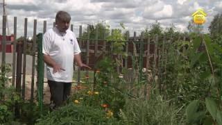 видео Правильно посадить виноград весной в средней