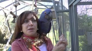 Recreo Diario - Criadero de Guacamayos - Liliana Petroselli
