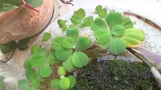 Чем кормить улитку. Про водные растения - вопрос к улитководам.