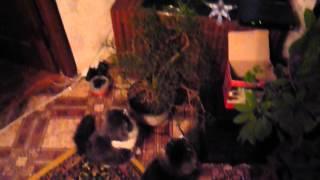 кошки смотрят телевизор