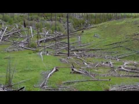 Yellowstone National Park Bear 2010