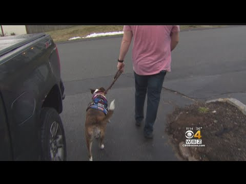 Marine Veteran Credits Operation Delta Dog With Helping Him