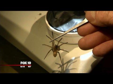 Arizona man operates spider farm in Yarnell