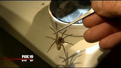 Arizona man operates spider farm in Yarnell
