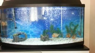 Gambar cover piranha natteri etçil 150 litre akvaryum
