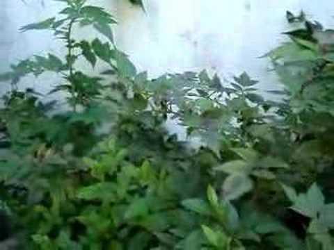 Jardim do Aden